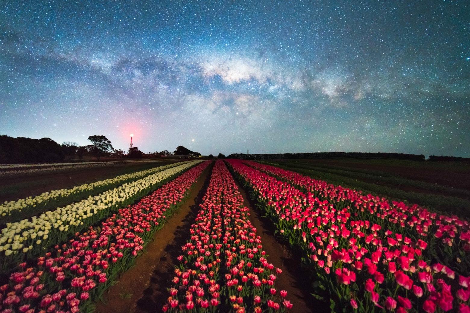Table Cape Tulip Farm at night