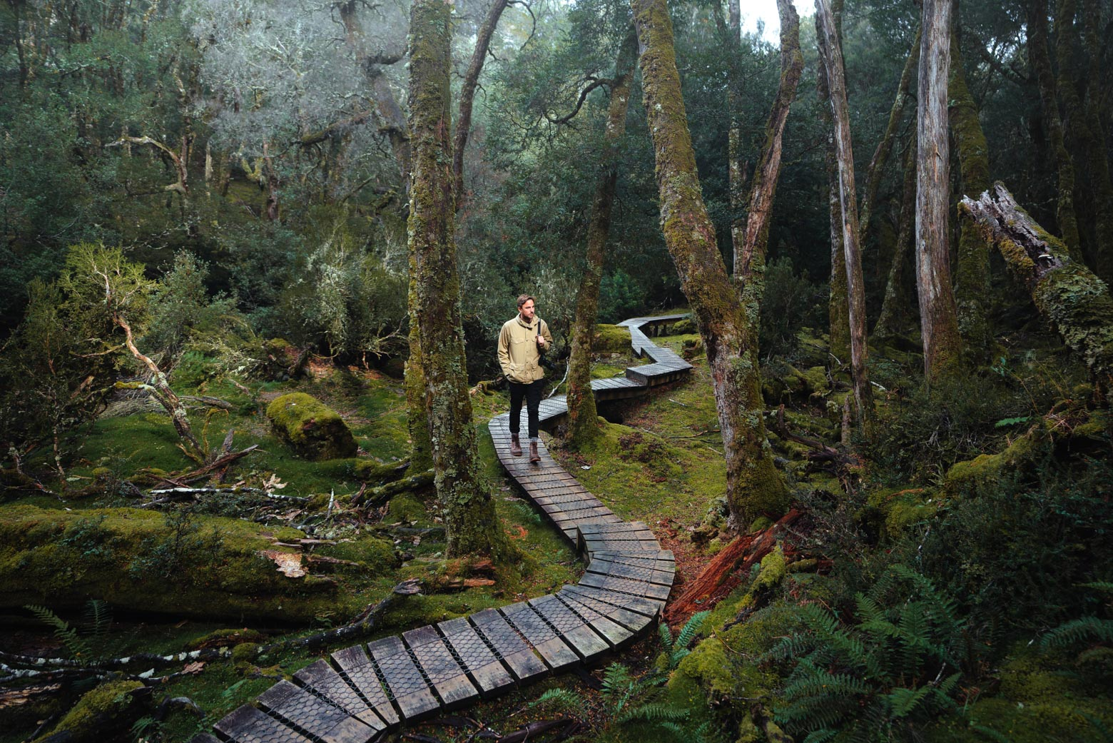 Walking the Knyvet Falls Track on your Lap of Tasmania road trip