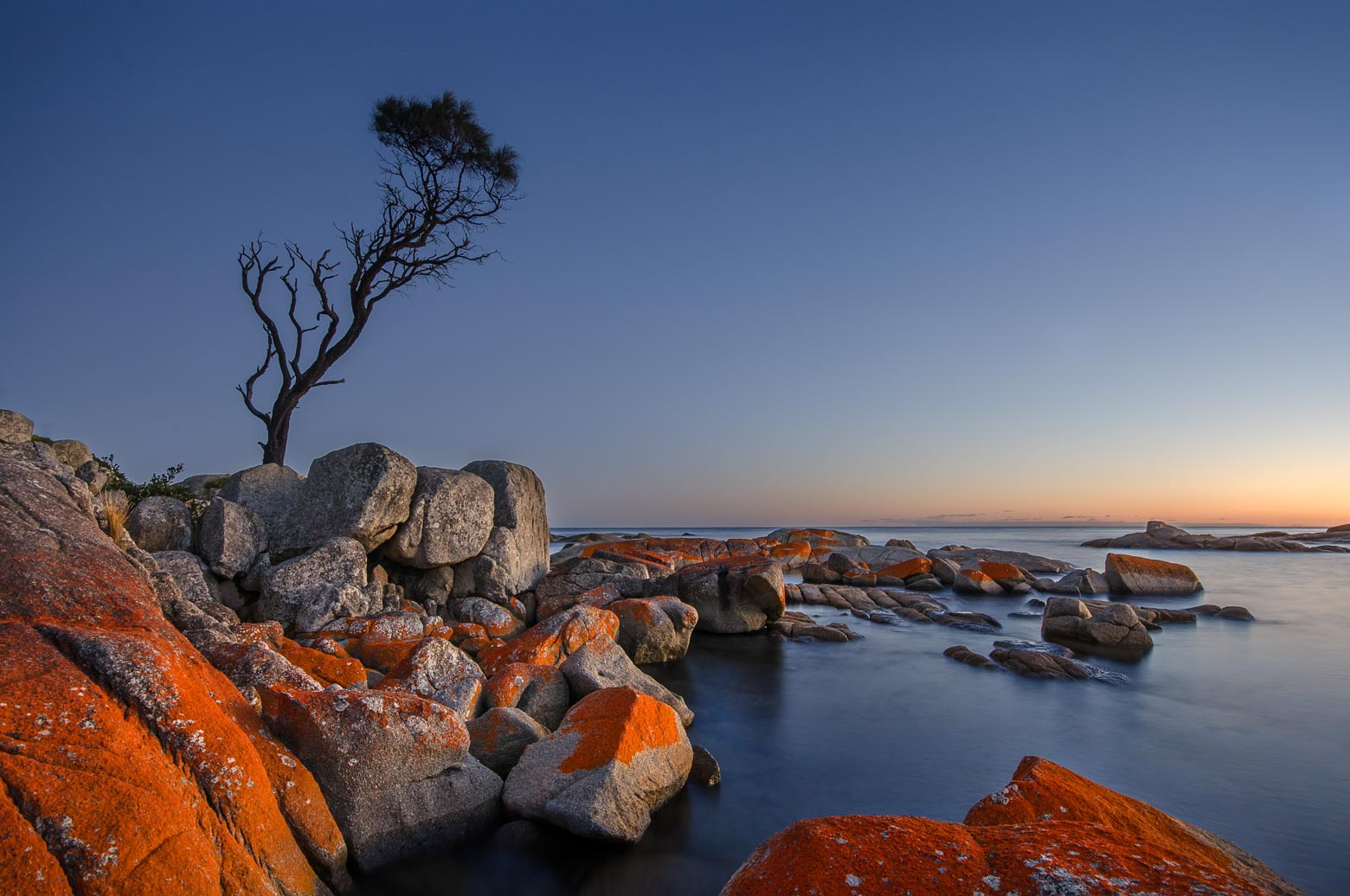 'Lone Tree' at the Bay of Fires' - One of the best Tasmania highlights