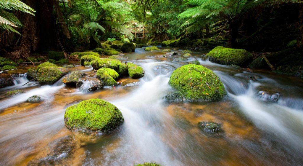 Experience the St Columba Falls Walk on your Lap of Tasmania road trip