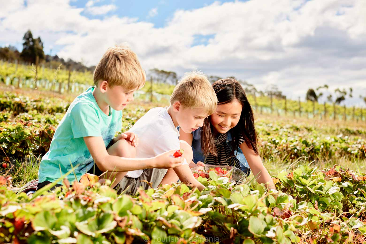 Picking fruit at Coal River Farm on your Lap of Tasmania Road Trip -