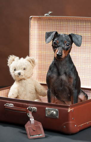 Dog and bear in suitcase - Lap of Tasmania Road trip