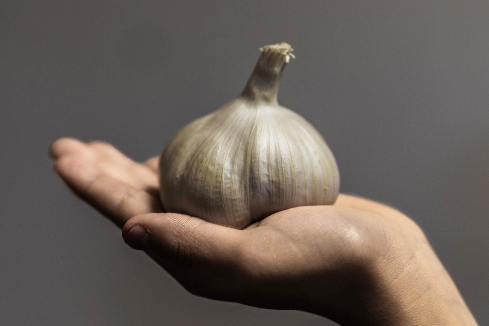 Koonya Garlic Festival