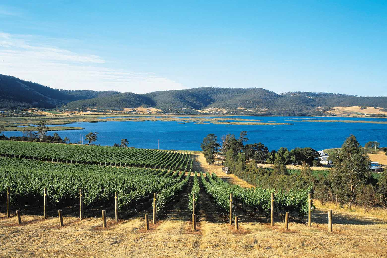 Enjoy Derwent Estate on your Hobart Wine Tour