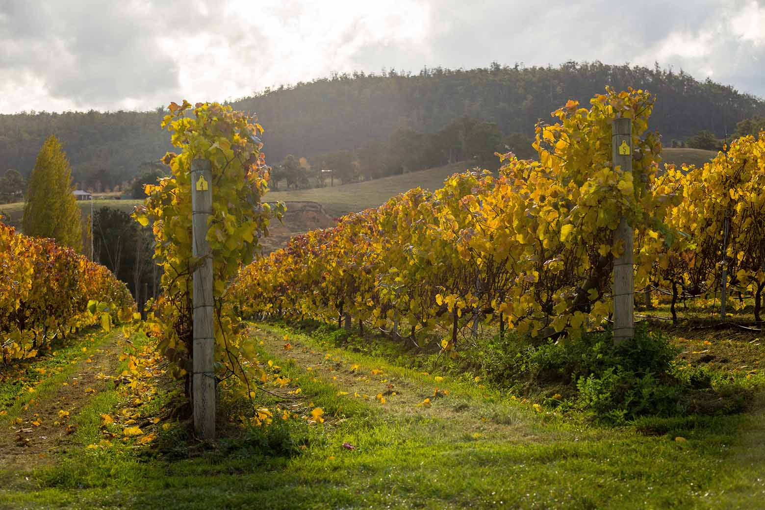 Visit Home Hill winery on your Hobart Wine Tour