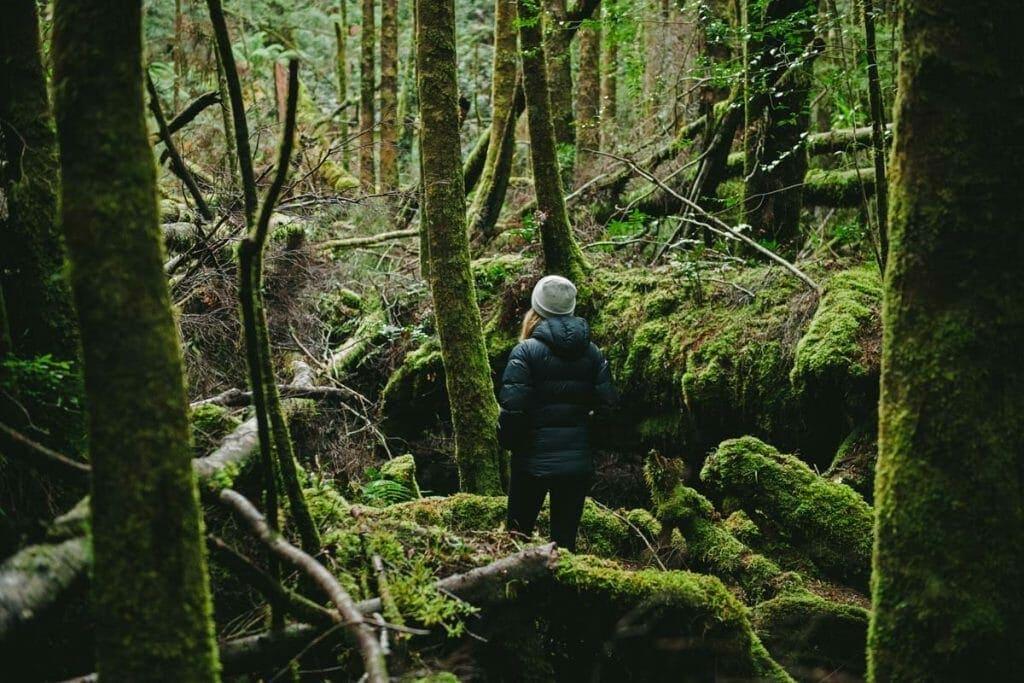 Franklin River Nature Trail
