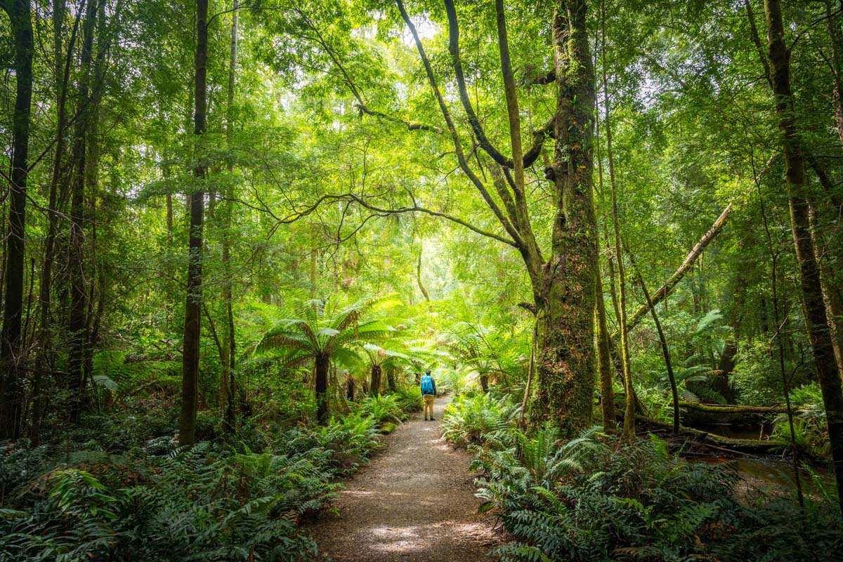 Best Short Walks in Tasmania - Hogarth Falls