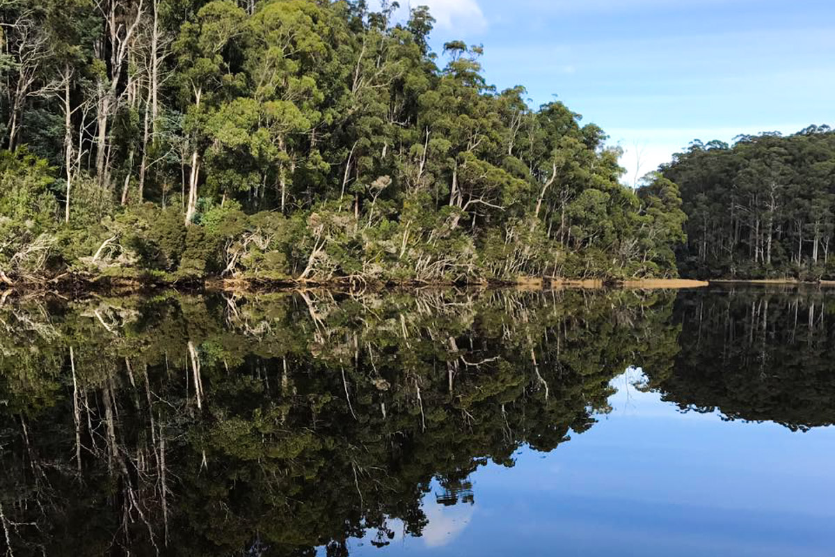 Leven River Cruises - Reflections