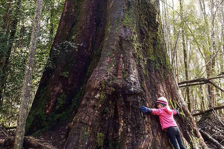 _KB Tasmania Trip Report 19